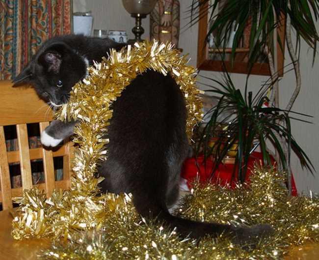 Кошка в Новом году