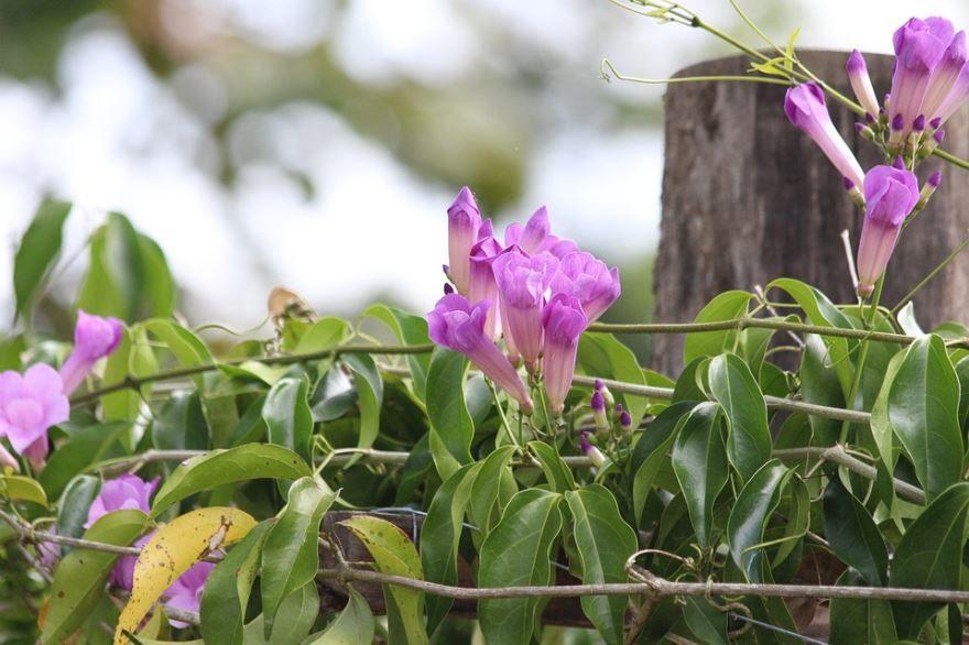 Купить фото вьющихся растений? Не нужно, скачайте бесплатно
