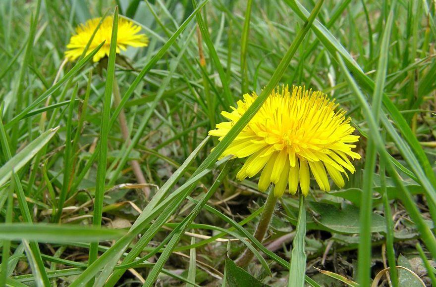 Скачать фото многолетних растений