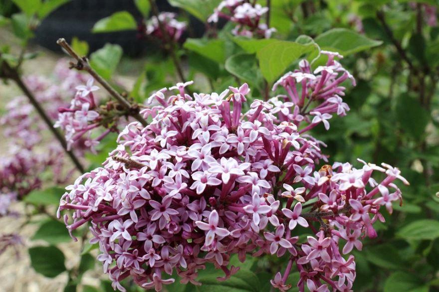 Неприхотливые, многолетние растения бесплатно