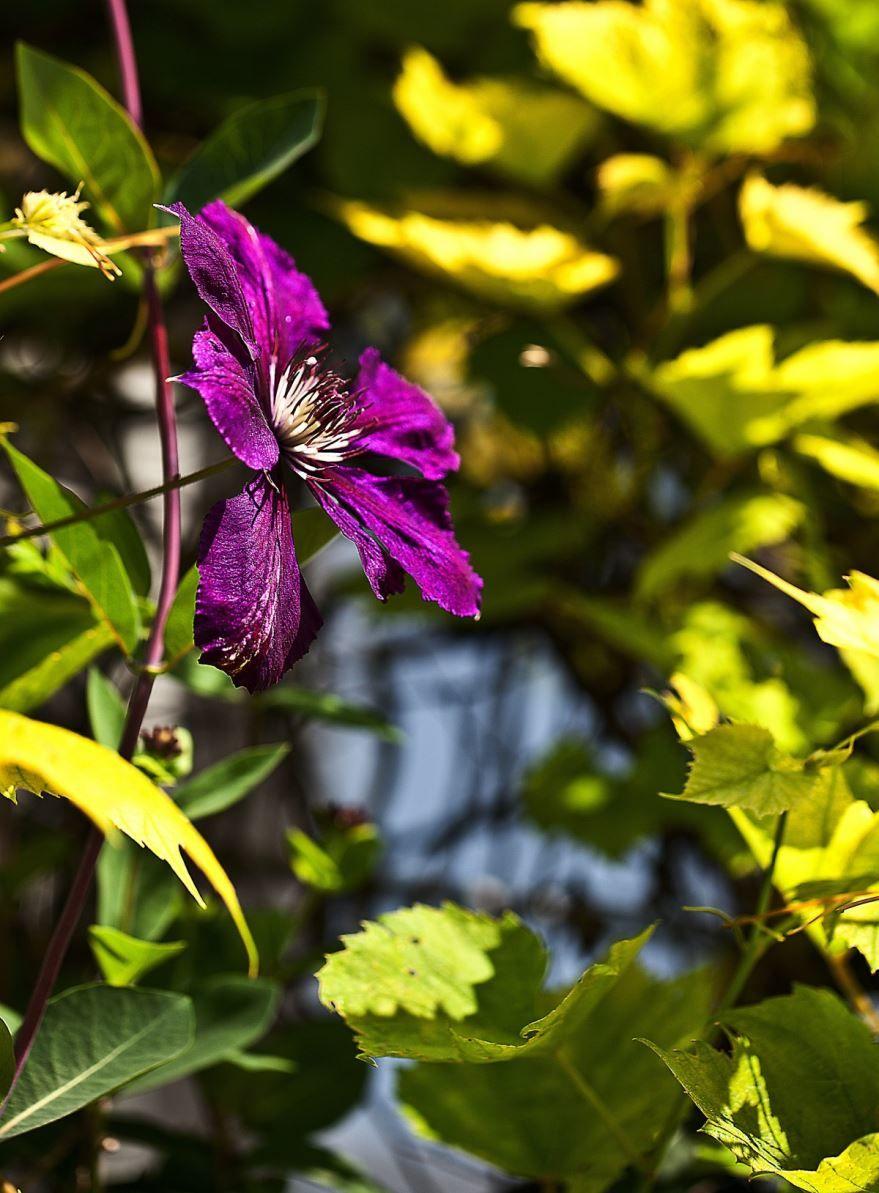 Фото многолетнего растения для сада