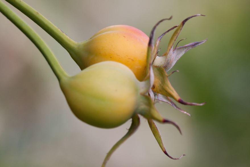 Смотреть фото лекарственных дикорастущего растения бесплатно