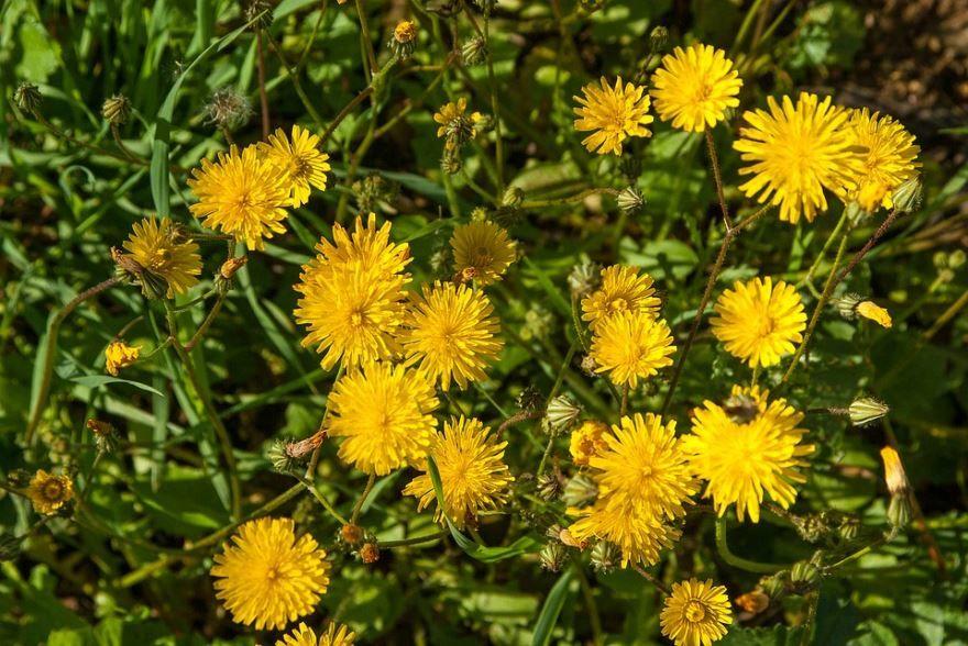 Смотреть фото дикорастущего растения бесплатно