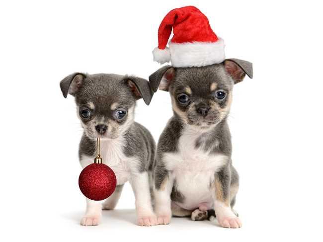 С Новым годом собаки скачать бесплатно