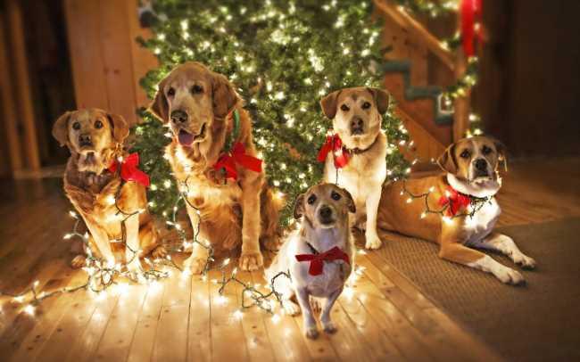 С Новым годом собаки