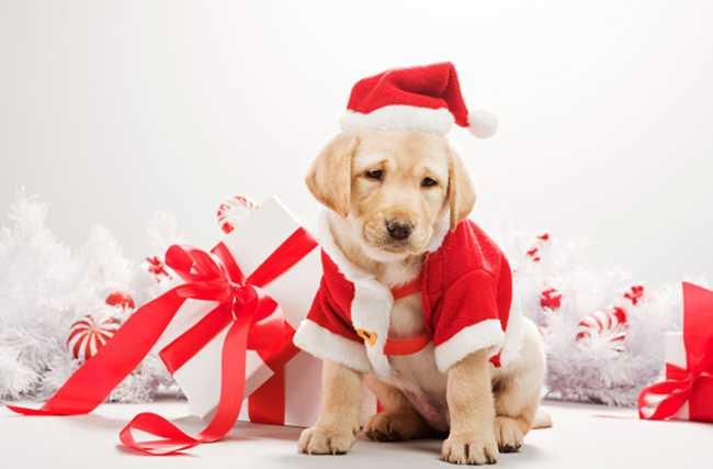 С Новым годом собаки фото