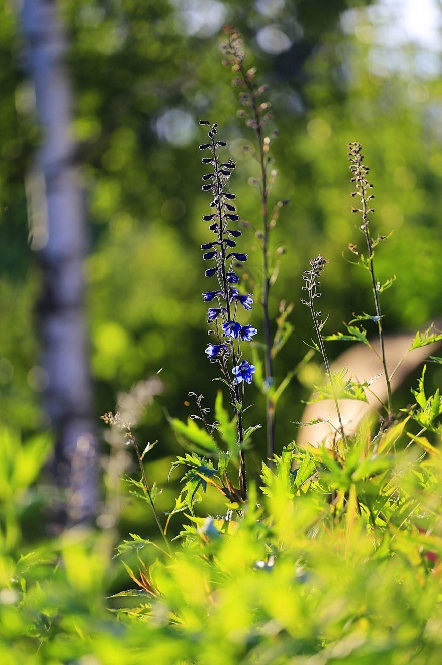 Фото растений средней полосы России