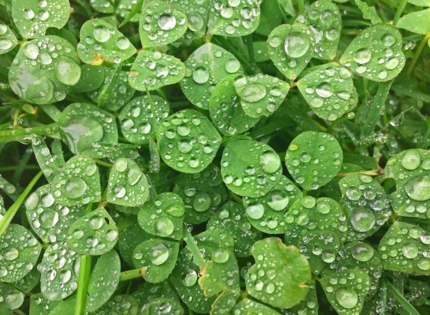 Фотографии растений разной формы