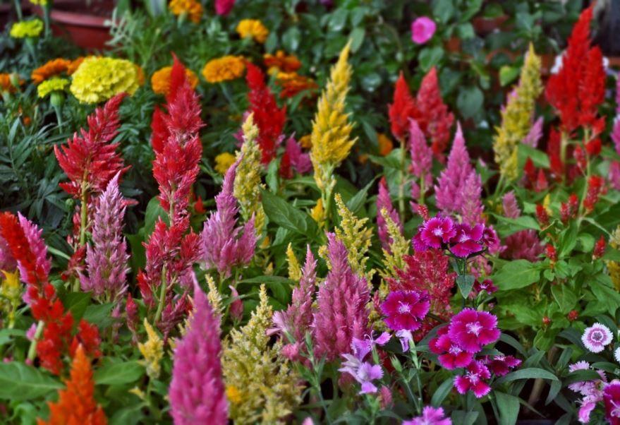 Фото растений разного вида