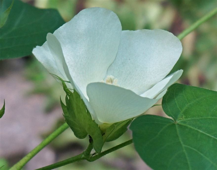 Фото лунного цветка для скачивания онлайн