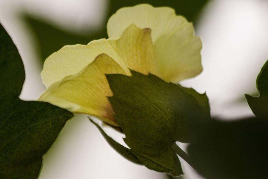 Бесплатные фото и картинки лунного цветка