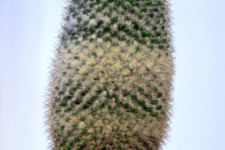 Как поливать кактусы в домашних условиях? Один раз в день