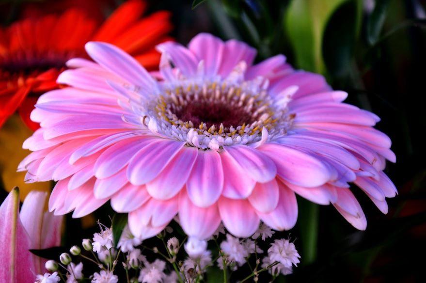 сток красивые цветы фото герберы требований фото рвп