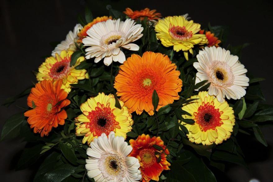 Фото гербер, красивых цветов для отличных букетов