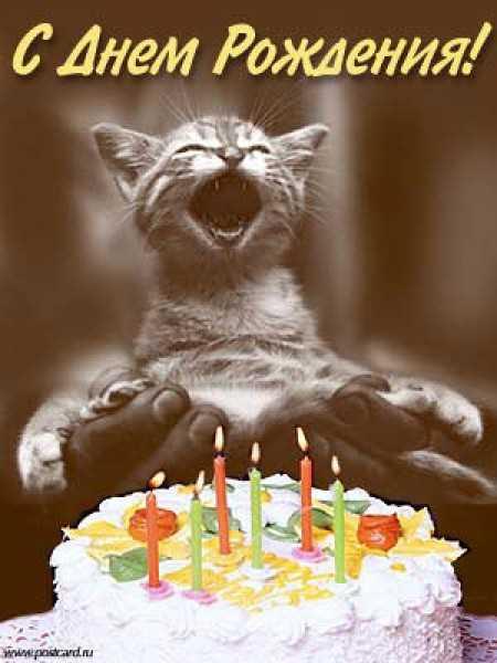 с днем рождения, котик, торт со свечами