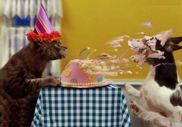 с днем рождения, приколы, котики, торт