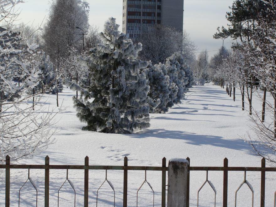 Кедровая роща зимой город Коряжма
