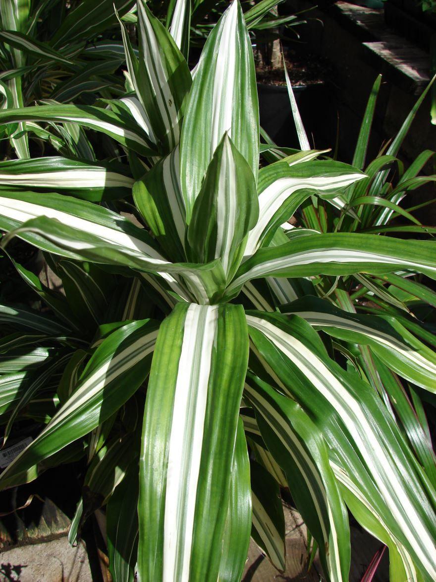 Цветущие травы луговые моск обл фото название момента