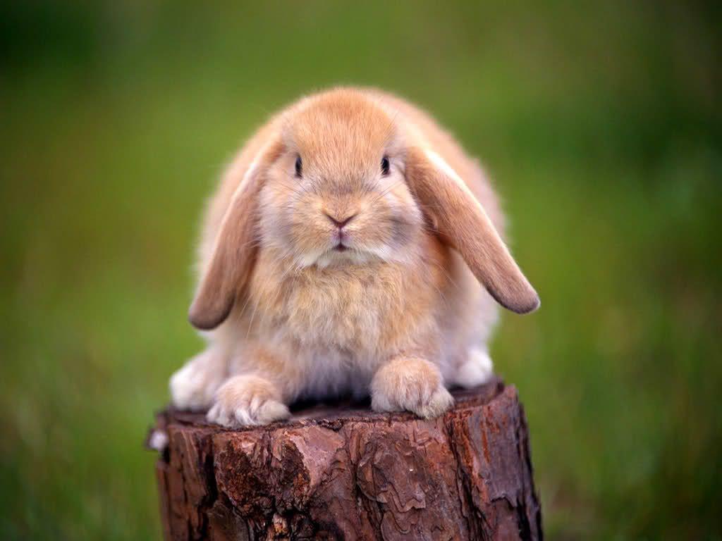 2023 год животное восточный китайский календарь кролик