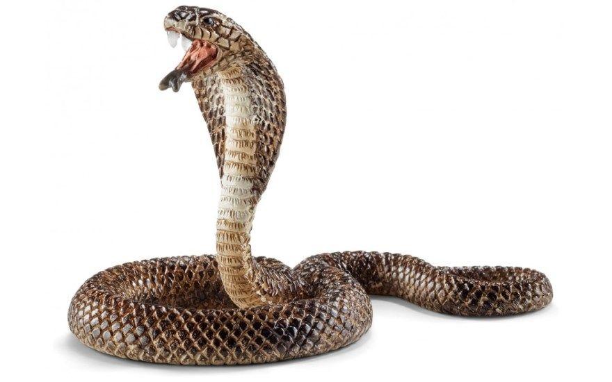 2025 год животное восточный китайский календарь змеи