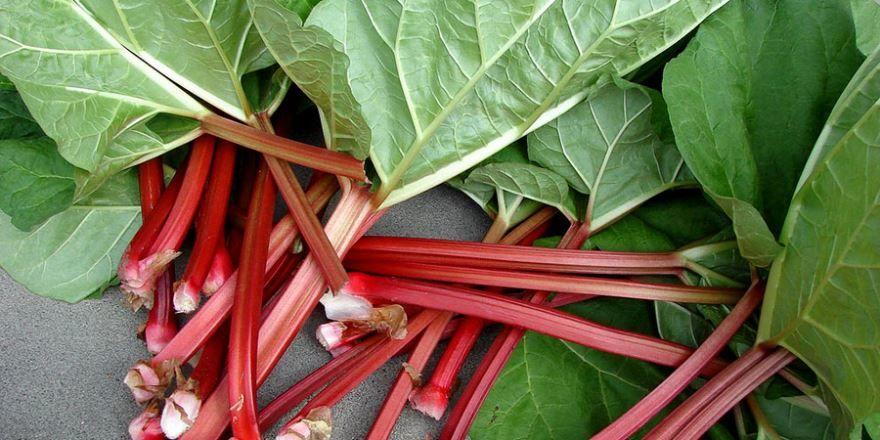 Фото полезного растения ревня, для полезных рецептов на зиму