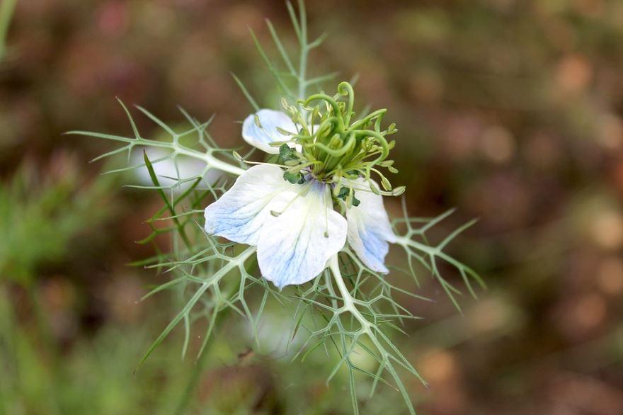 Смотреть фото полезного растения с лечебными свойствами