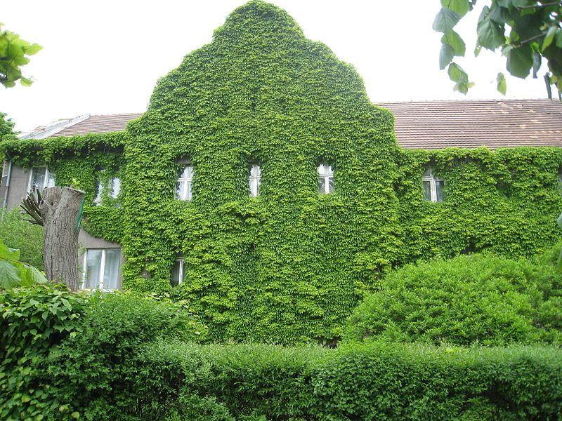 Смотреть красивое фото дом и зеленая стена город Светлогорск