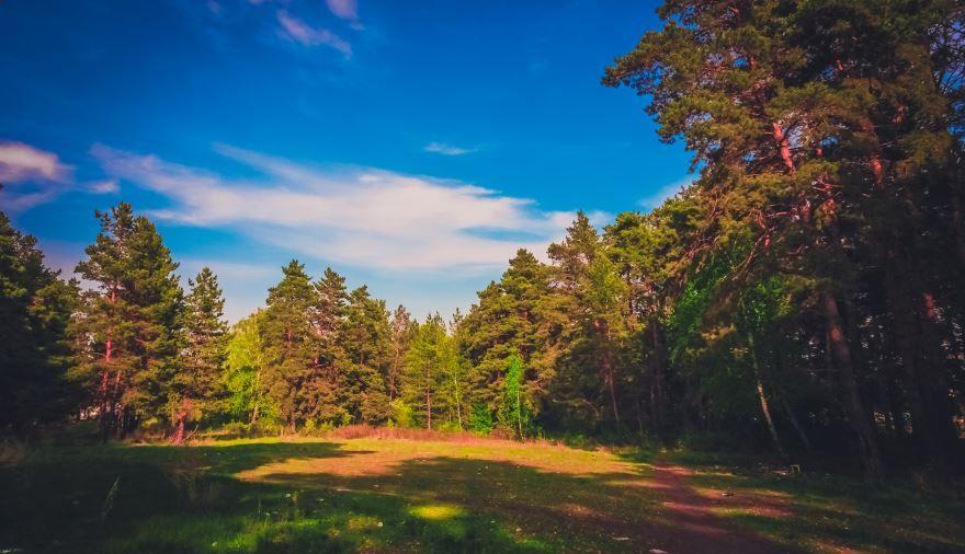 Смотреть красивое фото природа города Сосновый бор в хорошем качестве