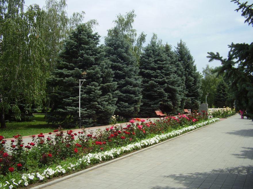 Смотреть красивое фото Аллея в парке город Тимошевск 2019