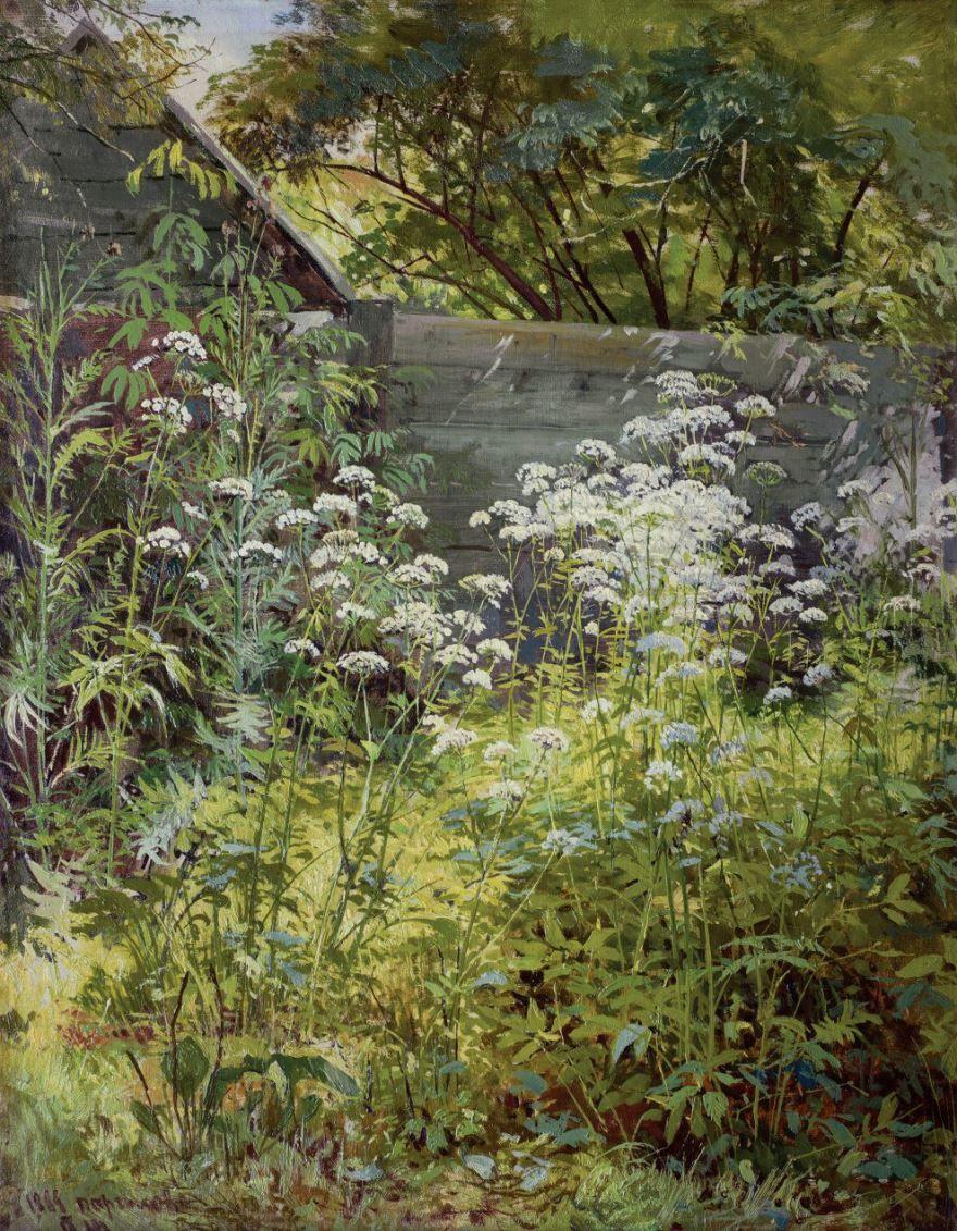 Фото обыкновенной травы сныть бесплатно
