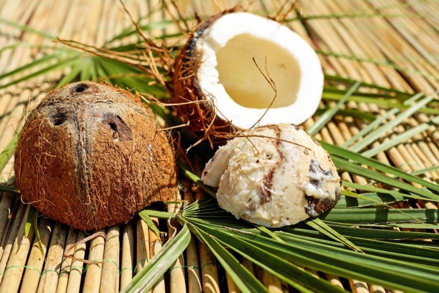 Смотреть фото кокосов онлайн