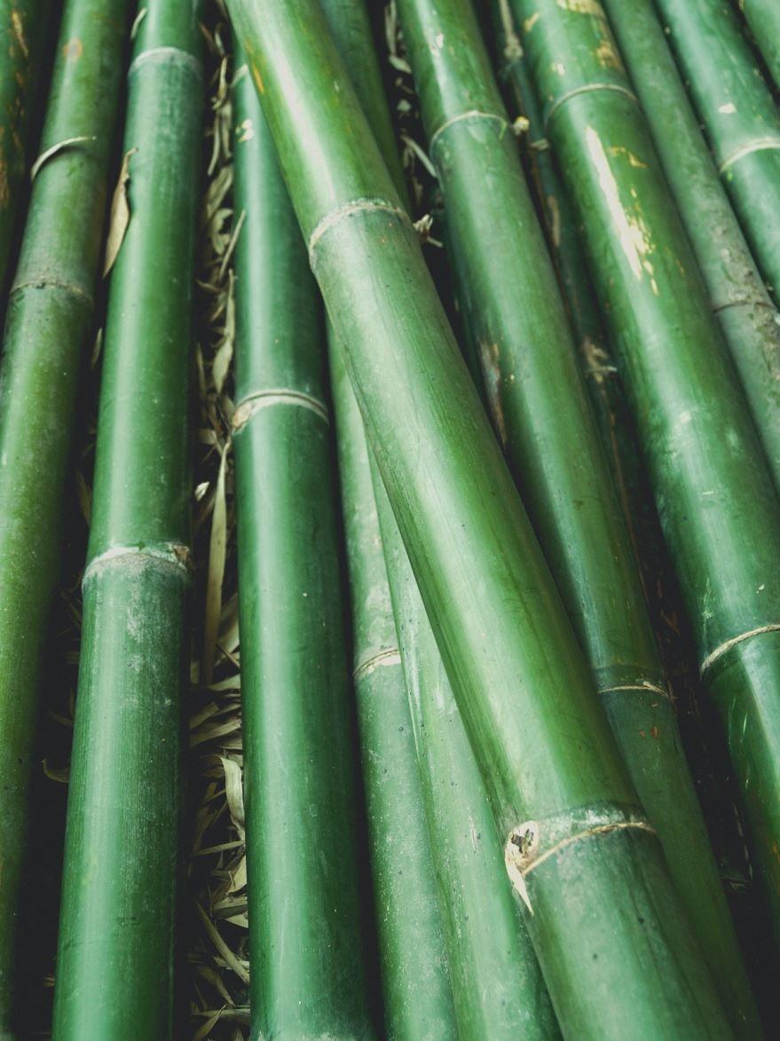 Смотреть фото и картинки комнатного растения бамбука лаки
