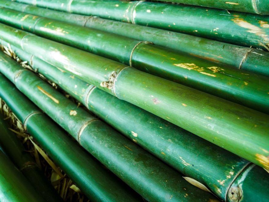 Скачать фото домашнего бамбука бесплатно