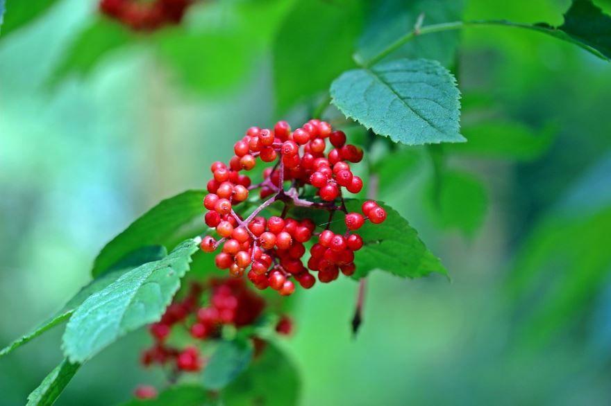 Смотреть фото ягод брусники с противопоказаниями