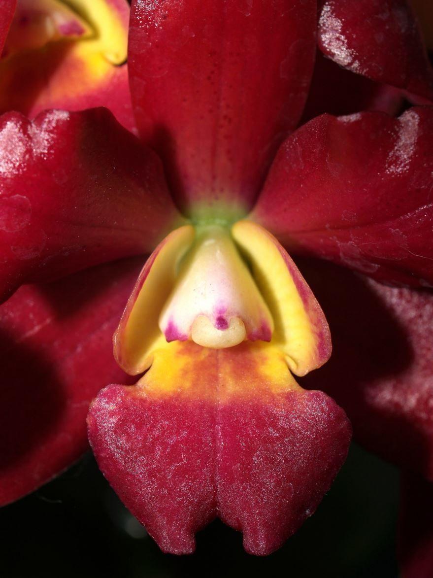 Фото осенних цветов ванды