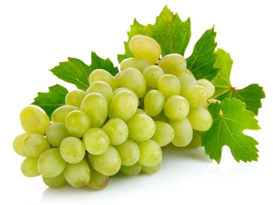 Смотреть фото домашнего винограда бесплатно