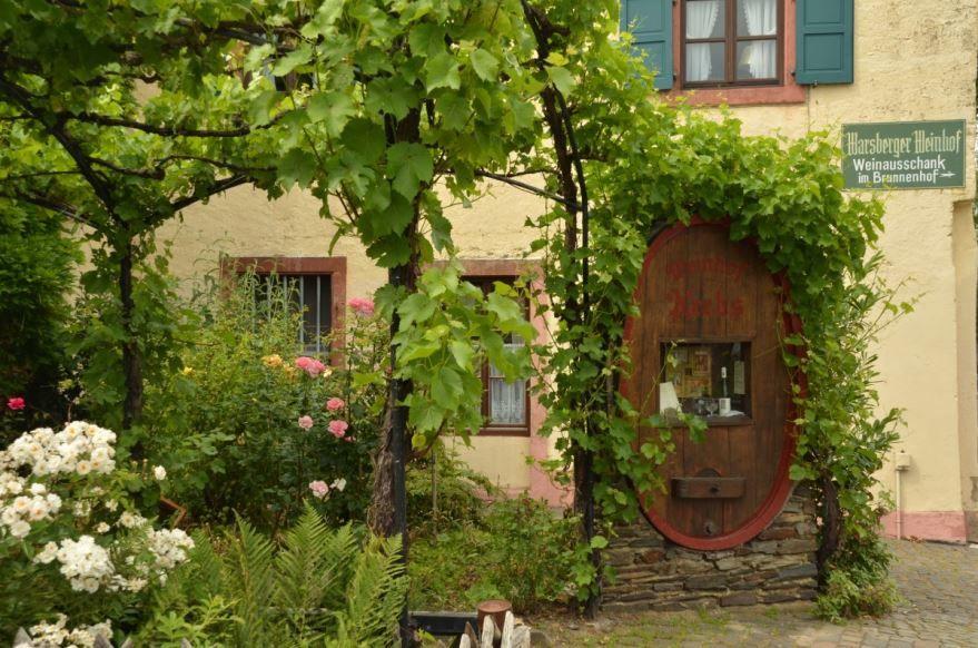 Фото домашнего винограда, выращенного в домашних условиях
