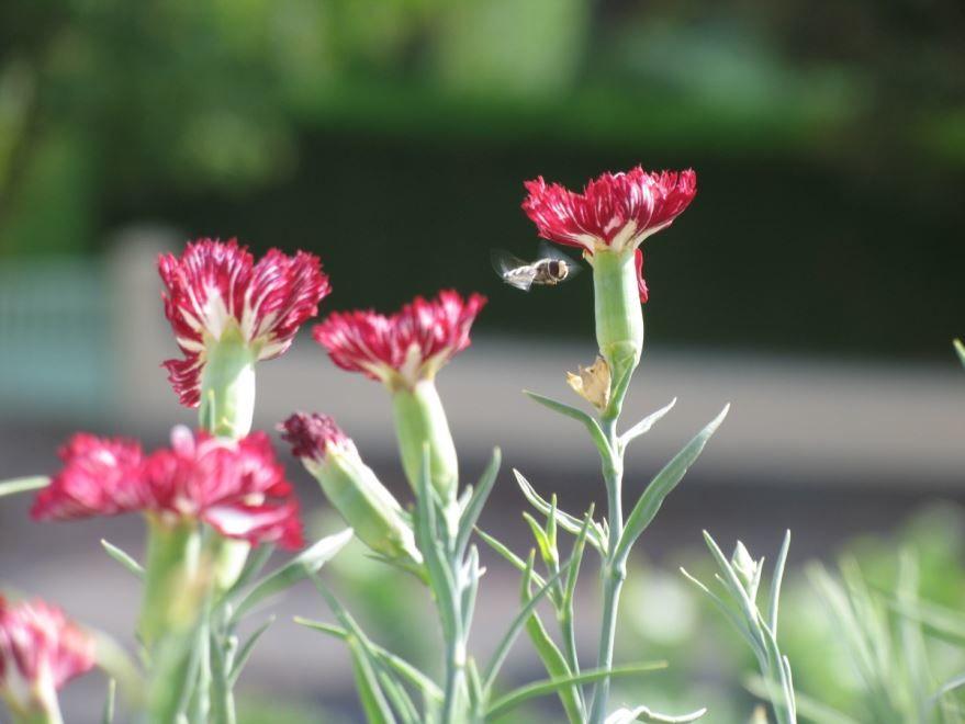 Фото красивого, красного цветка для хорошего букета