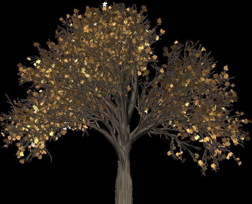 Фото листьев дерева вяз бесплатно
