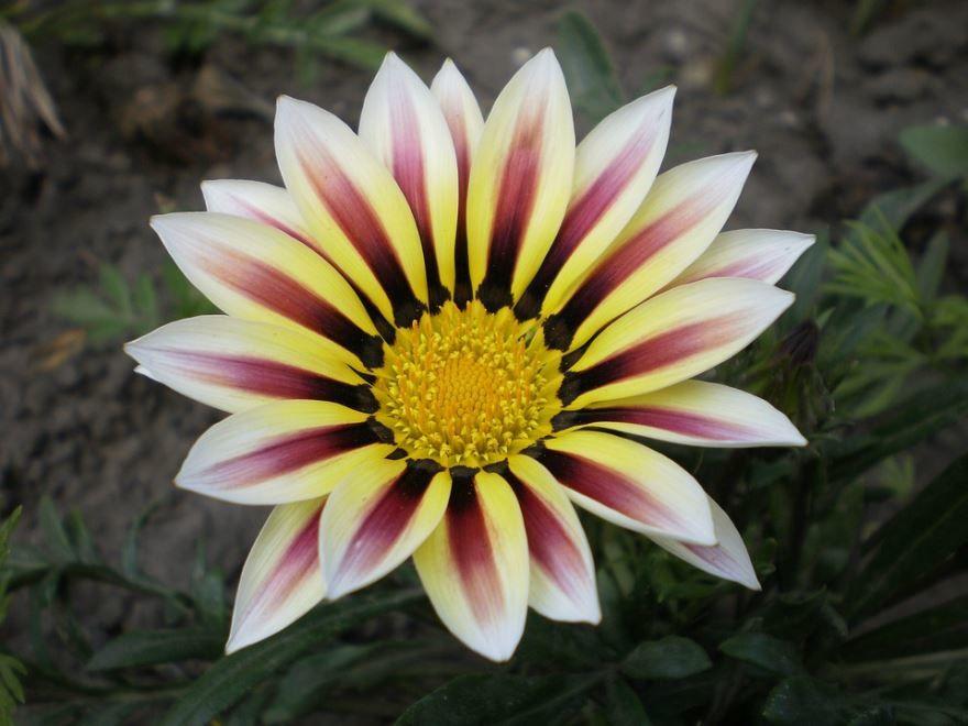 Фото цветков гацания бесплатно