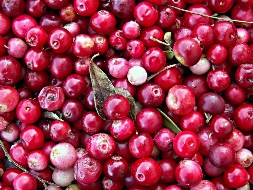 Купить фото ягод клюквы? Скачайте бесплатно
