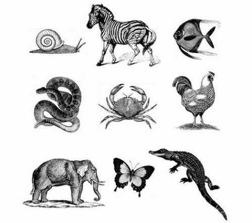 Упражнение на развитие памяти и запоминания - Зоопарк