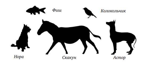 Упражнения на развитие памяти и запоминания - животные и клички