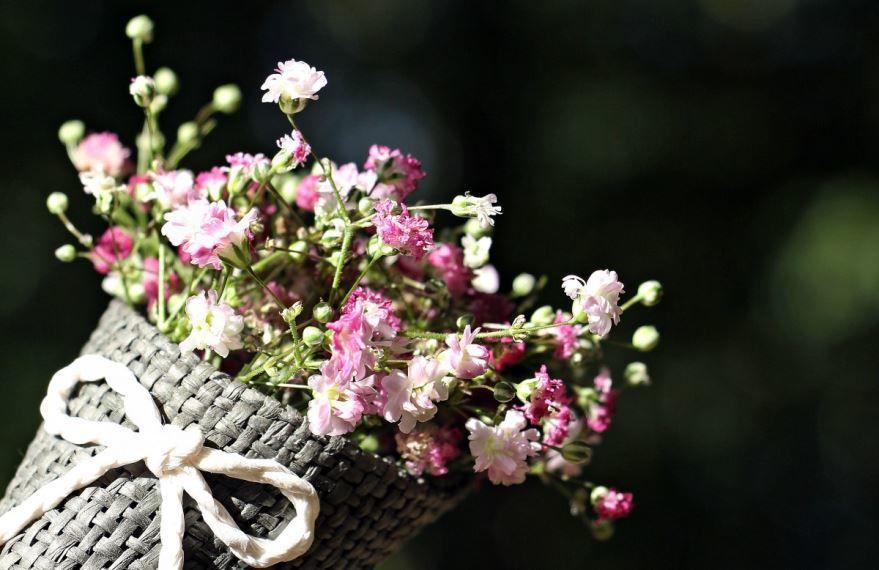 Фото красивых цветов гипсофилы виладж