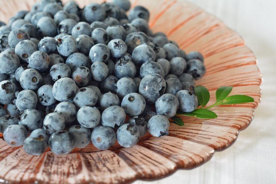 Фото куста с ягодами голубики онлайн