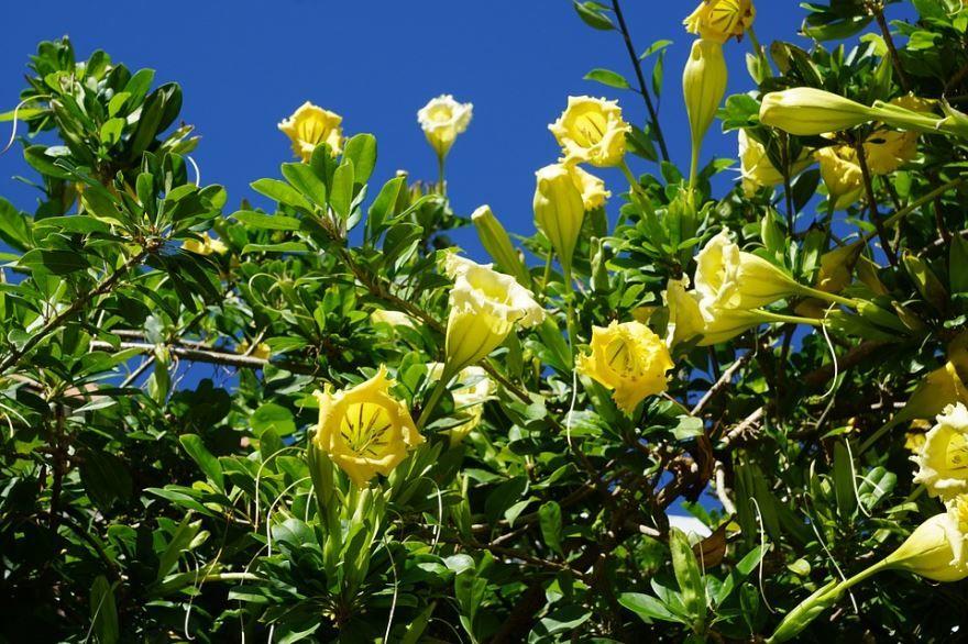 Смотреть онлайн красивые фото травы дурман