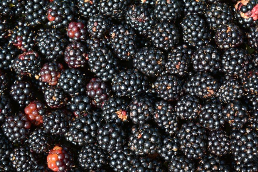 Скачать лучшие фото ягоды – ежевика блэк