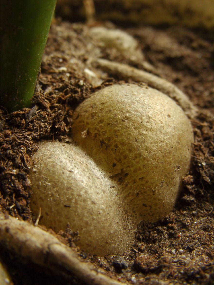 Фото стебля и домашнего цветка замиокулькас бесплатно