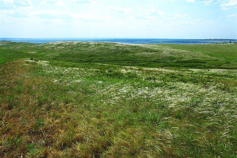 Купить фото травы ковыля? Скачайте бесплатно