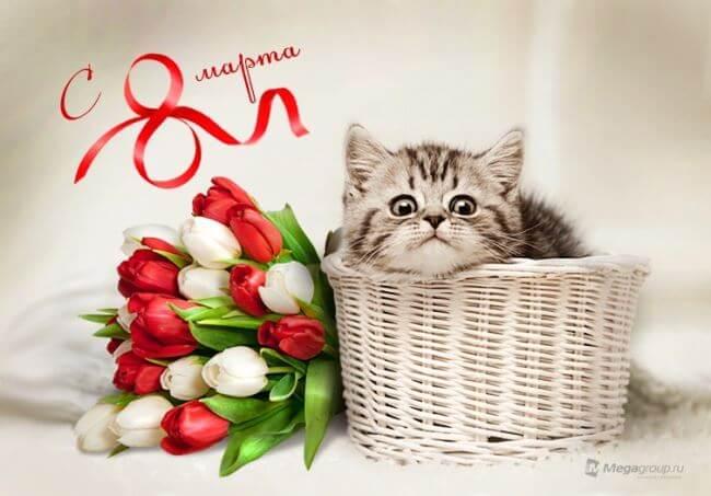 С 8 марта!  Букет цветов и котик